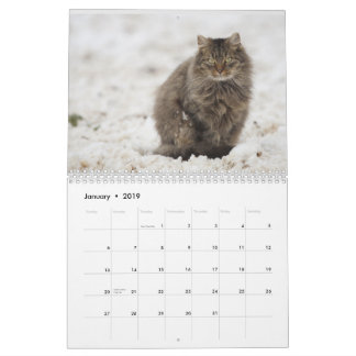 Calendar For Cat Lovers