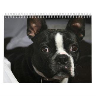 Calendario 2009 de Boston Terrier