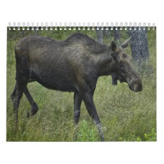 Calendario 2010 de la fauna