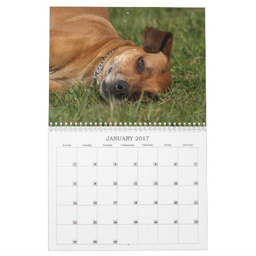 Calendario 2011 de Rhodesian Ridgeback