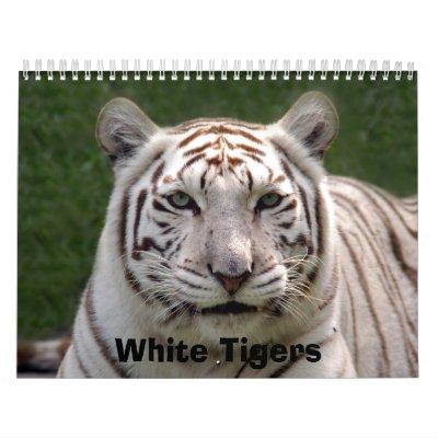 Calendario blanco de los tigres, tigres blancos