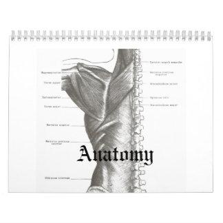 Calendario de la anatomía