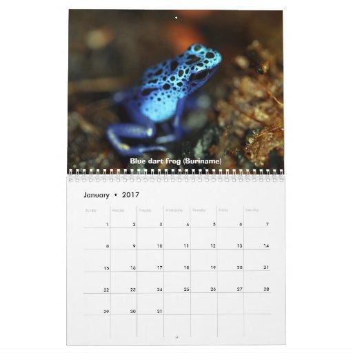 Calendario de las ranas