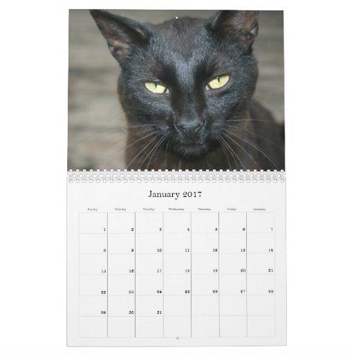 Calendario de los gatos 2010