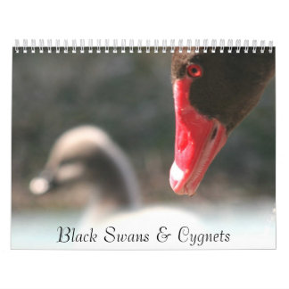 Calendario de pared de los cisnes negros y de los