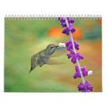 Calendario del colibrí del patio trasero