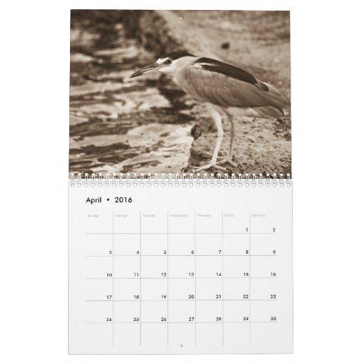 calendario del pájaro