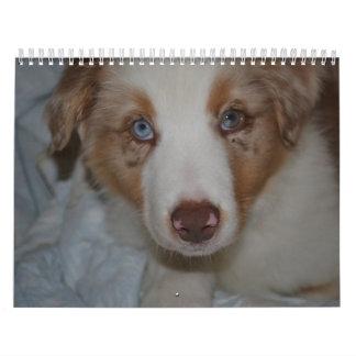 Calendario del pastor de 2014 australianos