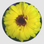 Calendula amarillo brillante alegre etiqueta redonda
