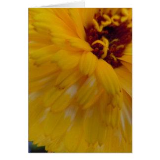 Calendula anguloso lateral tarjeta de felicitación