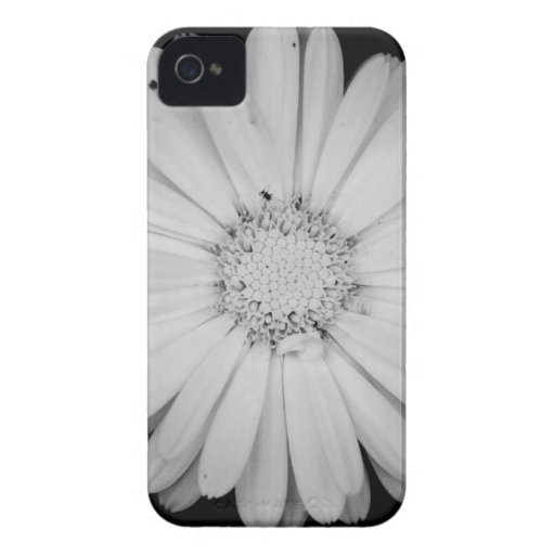 calendula-flower--black-and-white-laura-melis.jpg iPhone 4 Case-Mate case