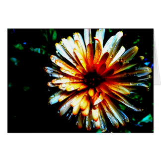 Calendula in the Rain Greeting Card
