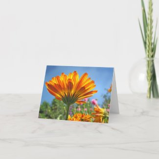 Calendula Note Card