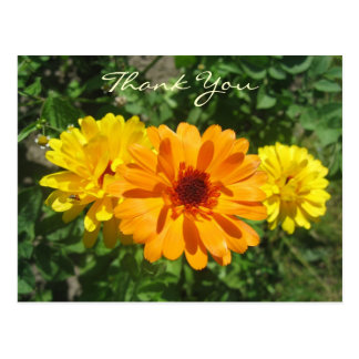 Calendula Trio Photo Postcard