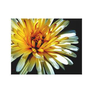 Calendula wow impresión en lienzo