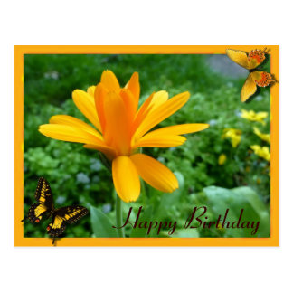 Calendula yellow postcard