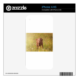 calf-7902 skin for the iPhone 4S
