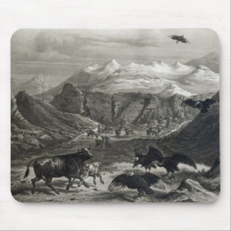 Calf being attacked by the Condors Mouse Pad