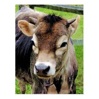 Calf Closeup Postcard