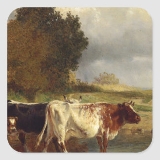 Calf cows at the marl by Constant Troyon Square Sticker