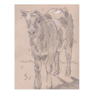 Calf Drawing Postcard