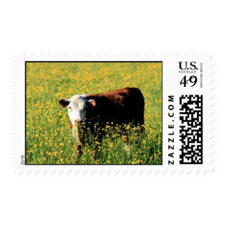 calf in a field of dandelions postage stamp