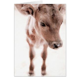 Calf on White Greeting Card