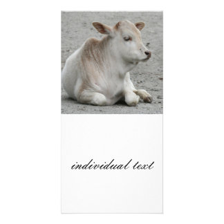 calf photo greeting card