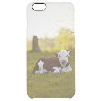 Calf resting in rural landscape. clear iPhone 6 plus case