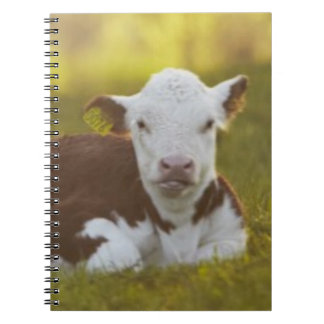 Calf resting in rural landscape. spiral note books