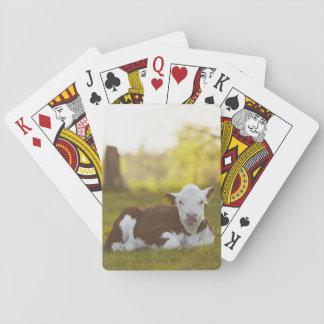 Calf resting in rural landscape. poker cards