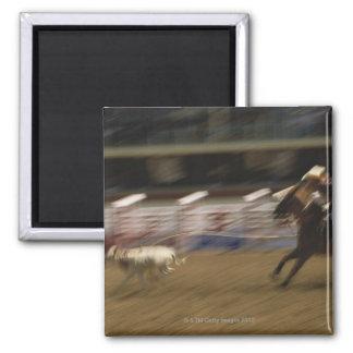 Calf Roping, Calgary Stampede Magnet