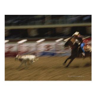 Calf Roping, Calgary Stampede Postcard