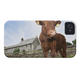 Calf standing in meadow iPhone 4 Case-Mate case