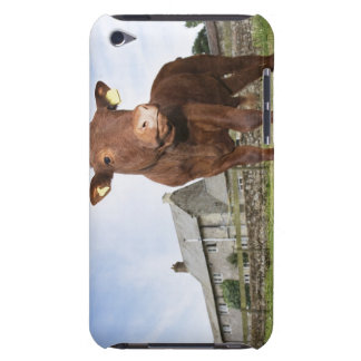 Calf standing in meadow iPod Case-Mate cases