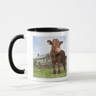 Calf standing in meadow mug