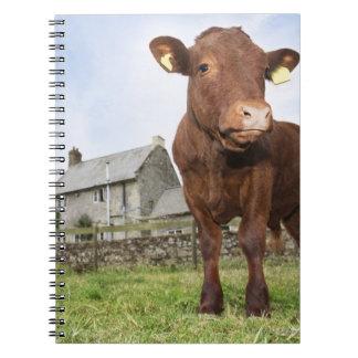 Calf standing in meadow notebook
