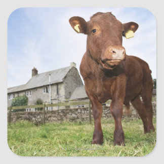 Calf standing in meadow stickers