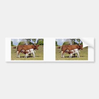Calf suckling bumper sticker