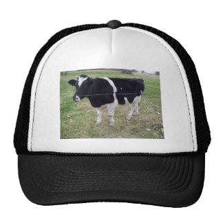 Calf Talk Trucker Hat