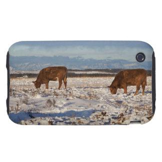 Calgary, Alberta, Canadá 2 Tough iPhone 3 Coberturas