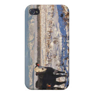 calgary, alberta, canada cases for iPhone 4