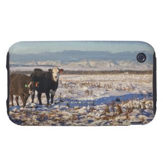 Calgary, Alberta, Canadá iPhone 3 Tough Carcasa