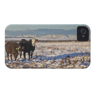 calgary, alberta, canada iPhone 4 case