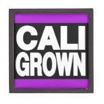 Cali crecido púrpura