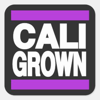 Cali crecido púrpura pegatina cuadrada