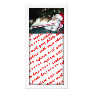 Cali the Calico Christmas Cat Personalized Photo Card