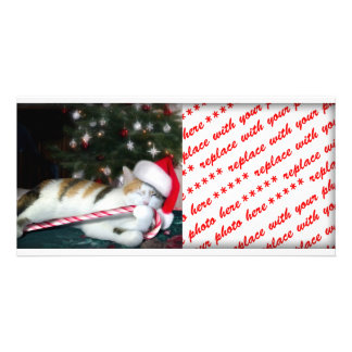 Cali the Calico Christmas Cat Photo Card Template