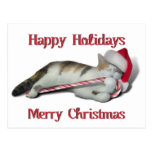 Cali, the Candy Cane Kitty Postcard