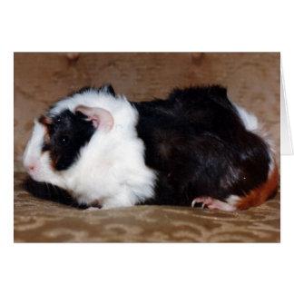Calico Abbyssinian Guinea Pig Card